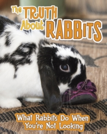 The Truth About Rabbits : What Rabbits Do When You're Not Looking, Hardback Book