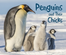 Penguins and Their Chicks, Hardback Book