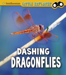Dashing Dragonflies, Paperback / softback Book