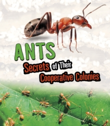 Ants : Secrets of Their Cooperative Colonies, Paperback / softback Book