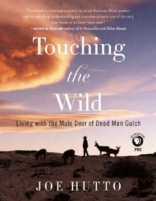 Touching the Wild : Living with the Mule Deer of Deadman Gulch, Paperback / softback Book