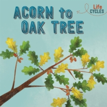 Life Cycles: Acorn to Oak Tree, Paperback / softback Book