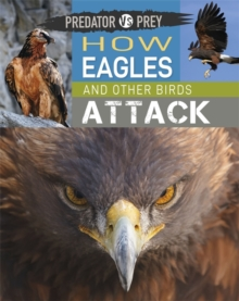 Predator vs Prey: How Eagles and other Birds Attack, Hardback Book