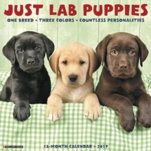 Just Lab Puppies 2019 Wall Calendar (Dog Breed Calendar), Calendar Book