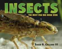 Insects, Hardback Book