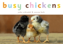 Busy Chickens, Board book Book