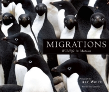 Migrations : Wildlife in Motion, Hardback Book