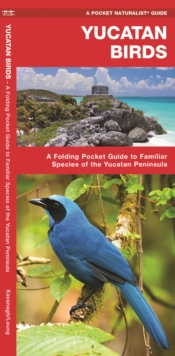 Yucatan Birds : A Folding Pocket Guide to Familiar Species of the Yucatan Peninsula, Pamphlet Book