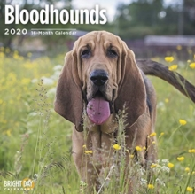 BLOODHOUNDS WALL CALENDAR 2020,  Book