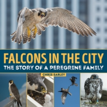 Falcons in the City : The Story of a Peregrine Family, Hardback Book