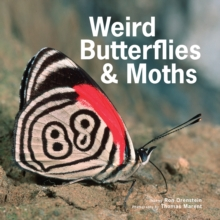 Weird Butterflies & Moths, Hardback Book