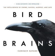 Bird Brains : The Intelligence of Crows, Ravens, Magpies, and Jays, Paperback / softback Book