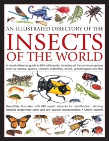 Illustrated Directory of Insects of the World : A Visual Reference Guide to 650 Arthropods, Including All the Common Species Such as Beetles, Spiders, Crickets, Butterflies, Moths, Grasshoppers and Fl, Paperback Book