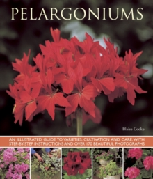 Pelargoniums, Paperback Book