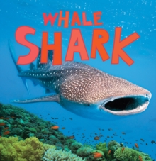 Discover Sharks: Whale Shark, Paperback Book