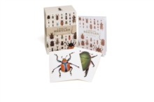 A Box of Beetles : 100 Beautiful Postcards, Postcard book or pack Book