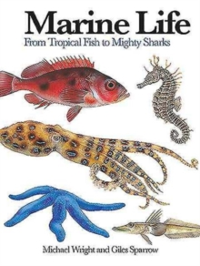 Marine Life : From Tropical Fish to Mighty Sharks, Paperback / softback Book