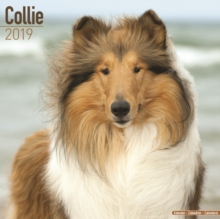 Collie Calendar 2019, Paperback Book