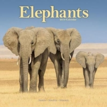 Elephants Calendar 2019, Paperback Book