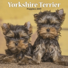 Yorkshire Terrier Puppies M 2019, Paperback Book