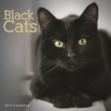 Black Cats W 2019, Paperback Book