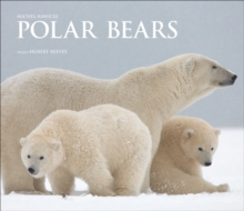 Polar Bears : A Life Under Threat, Hardback Book