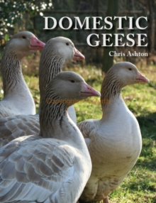 Domestic Geese, Paperback Book