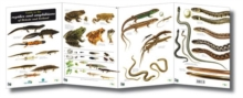 Guide to the Reptiles and Amphibians of Britain and Ireland, Sheet map, folded Book