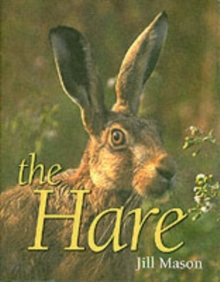 The Hare, Hardback Book