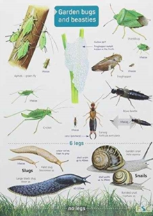Garden Bugs and Beasties, Fold-out book or chart Book