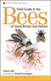 Field Guide to the Bees of Great Britain and Ireland, Paperback Book