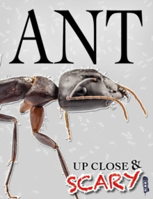 Up Close & Scary Ant, Paperback / softback Book