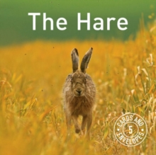 The Hare Card Pack, Cards Book