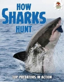 Shark! How Sharks Hunt, Paperback Book