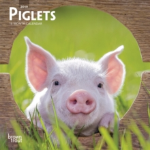 Piglets 2019 Mini Wall Calendar, Calendar Book