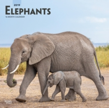 Elephants 2019 Square Wall Calendar, Calendar Book