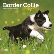 Border Collie Puppies 2020 Mini Wall Calendar, Calendar Book