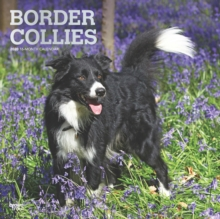 Border Collies 2020 Square Wall Calendar, Calendar Book