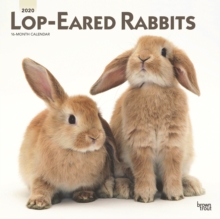 Lop Eared Rabbits 2020 Square Wall Calendar, Calendar Book