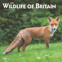 Wildlife of Britain 2020 Square Wall Calendar, Calendar Book