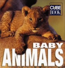 Baby Animals, Hardback Book
