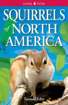 Squirrels of North America, Paperback / softback Book